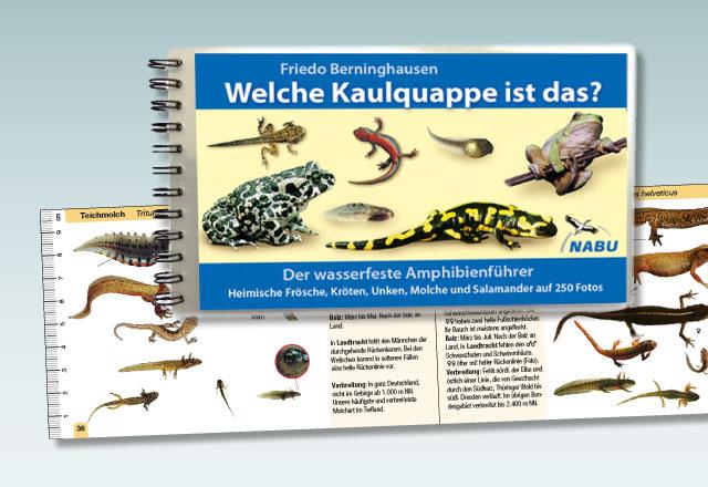 gwnews_0018_Froschbuch